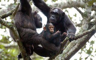 6 Days Rwanda Chimpanzees and Wildlife Safari