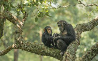 7 Days Best Uganda Safari