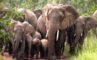7 Days Kidepo & Murchison Falls Safari