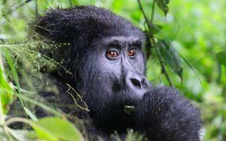 7 Days Uganda Rwanda Safari