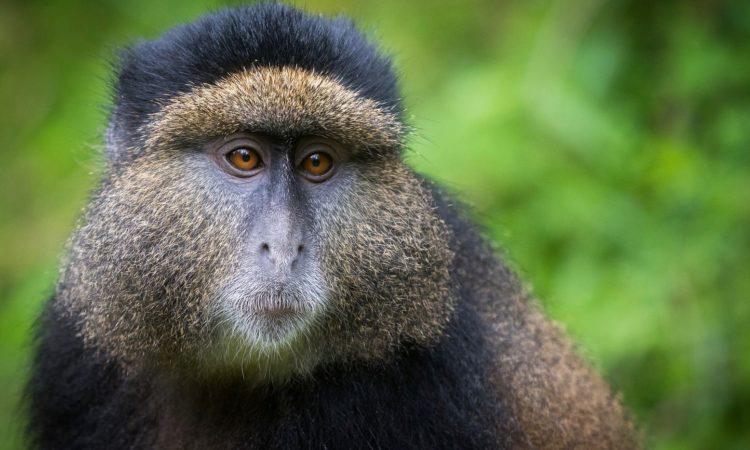 18 Days Combined Uganda & Rwanda Safari