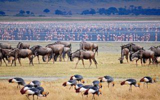 3 Days Lake Manyara Wildlife safari