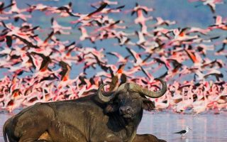 3 Days Lake Nakuru Wildlife Safari