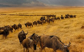 5 days Masai Mara wildlife and Cultural safari