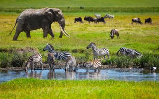 7 Days Classic Tanzania Wildlife Safari