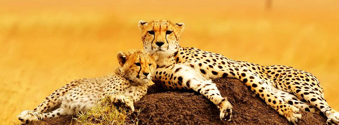 7 Days Classic Tanzania Wildlife Safari