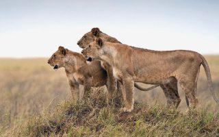 8 days best of Tanzania Wildlife Safari