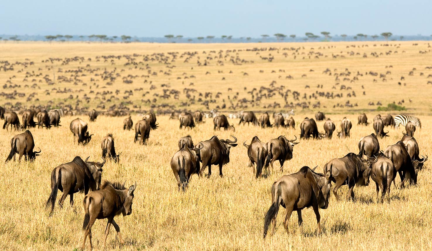 8 days best of Tanzania Wildlife Safari