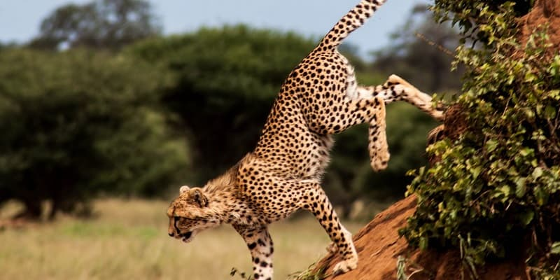 9 Days Tanzania Big 5 safari