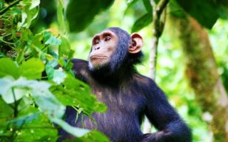 Attractions in Kibale Forest National Park