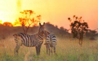 7 days Rhinos Kidepo valley and Murchison falls safari