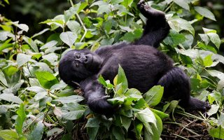 10 days Best of Congo safari tour