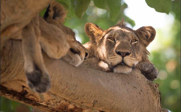 6 Days Uganda Rwanda gorilla and wildlife safari
