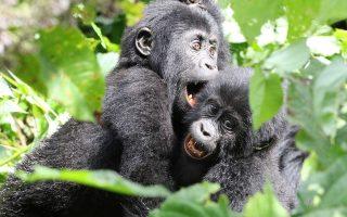 10 days Uganda honeymoon safari