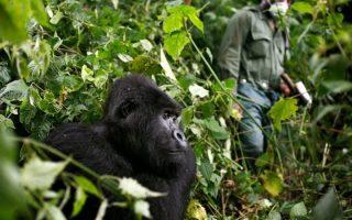 4 days Le Petit Virunga package (Mikeno)