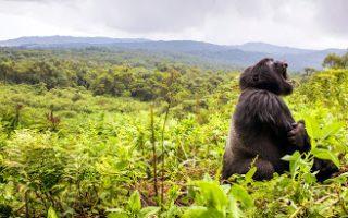 5 days Uganda Gorilla trekking & Rwanda Karisimbi Hiking safari