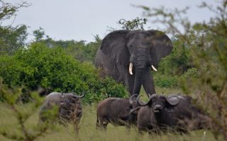 7 days Uganda Honeymoon safari