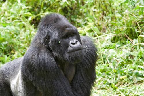 8 days Uganda wildlife safari & Nyiragongo hiking safari