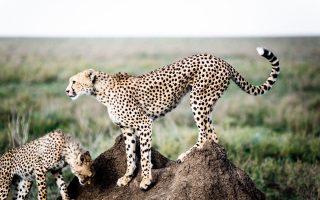 7 days Bwindi gorilla trekking & Serengeti Wildlife safari