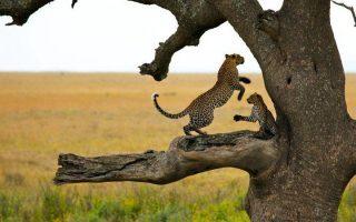 7 Days Serengeti Wildlife & Rwanda Gorilla Trekking