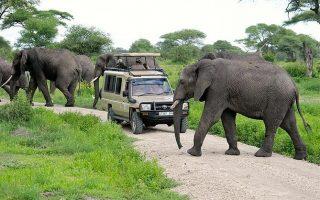 11 Days Tanzania Rwanda Safari Adventure