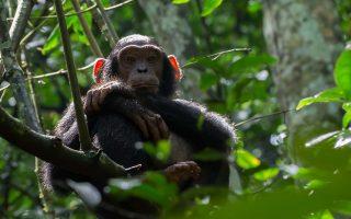 5 Days Nyungwe Forest Chimpanzee trekking and Nyiragongo hike