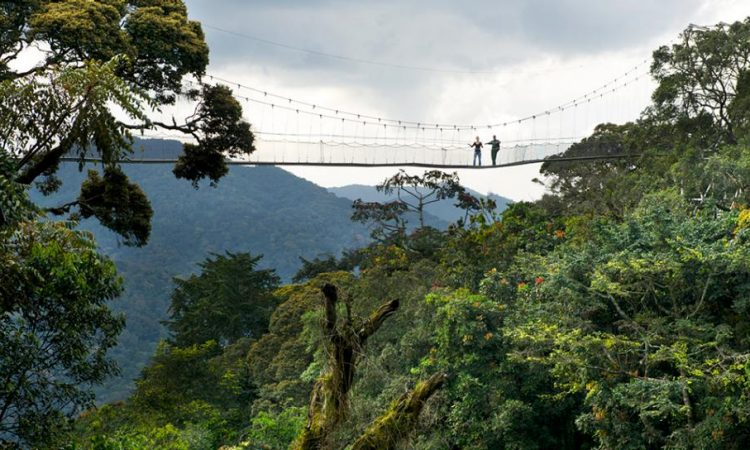5 Days Virunga, Lake Kivu, and Nyungwe forest safari tour