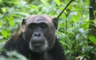 11 Days Uganda and Rwanda Wildlife safari