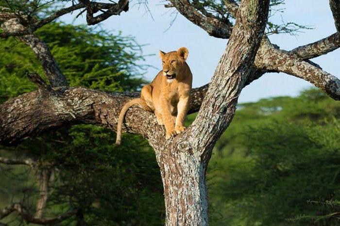 7 Days Congo and Uganda safari from Kigali