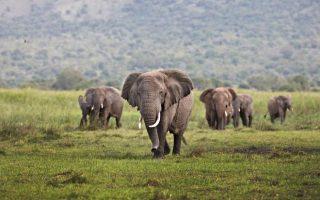 14 Days Tanzania, Rwanda & Uganda wildlife safari