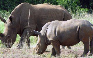 15 Days Best of Uganda Safari