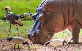 16 Days Best of Uganda Safari
