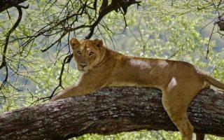 2 Days Serengeti National Park Wildlife safari