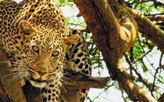 3 Days Tanzania Wildlife Safari tour