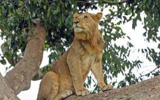 6 Days Queen Elizabeth National Park safari