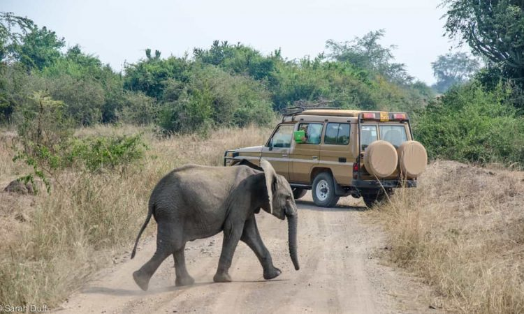 Game drive in Ishasha