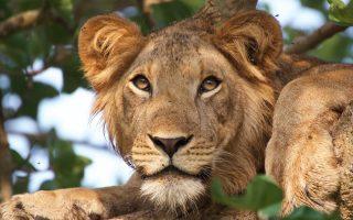 27 Days Uganda, Rwanda & Congo Safari