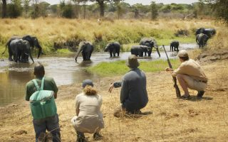 10 Days Tanzania Wildlife & Cultural safari tour