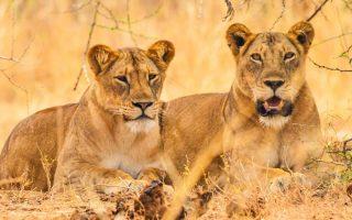 15 Days Uganda Kenya Primates & Wildlife Safaris