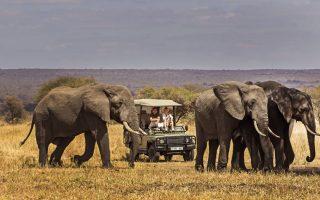 2 Days Tarangire Wildlife Safari