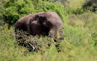 26 Days Uganda Rwanda Safari