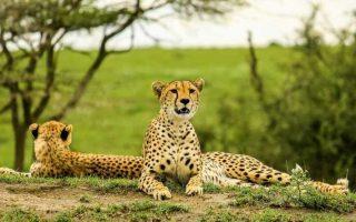 6 Days Lake Manyara, Ngorongoro & Tarangire safari
