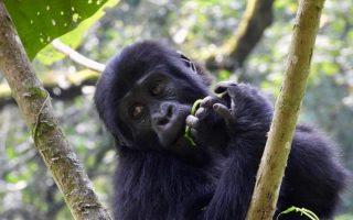 6 Days Uganda Primate Safari