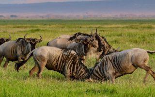 8 Days Kenya & Tanzania Combined Wildlife safari