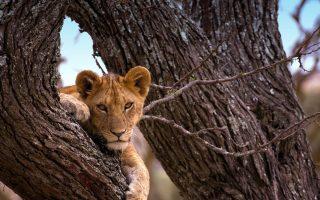 8 Days Ngorongoro, Serengeti & Zanzibar safari