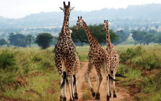 About Kidepo Valley National Park Uganda