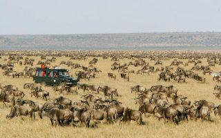7 Days Kenya & Tanzania Combined Safari