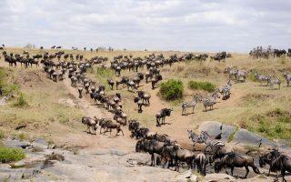 10 Days Best Kenya Wildlife Safari