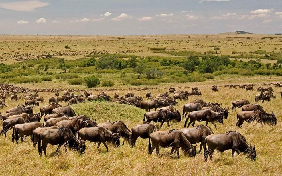15 Days Magnificent Kenya and Tanzania Safari