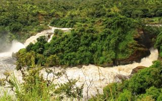 4 Days Murchison Falls & Kibale forest chimpanzee trekking safari